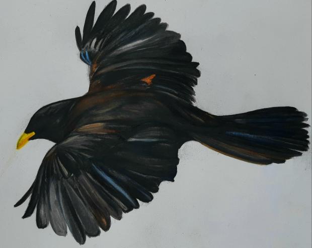'Enigma with a Blackbird'